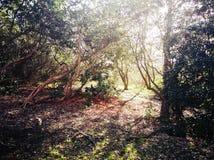 Richmond Park , London , United Kingdom. Richmond park london united kingdom tree greenery royal parks kingston brexit landscape branch twisting spring autumn stock images