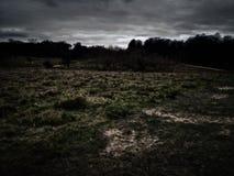 Richmond park, Londyn, Zjednoczone Kr?lestwo obrazy royalty free