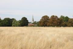 Richmond Park nedgånglandskap, UK Arkivfoton