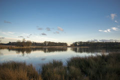 Richmond park. One of the ponds of this iconic park Royalty Free Stock Photos