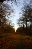 Richmond park, protected sightline in winter. View of St Paul`s Cathedral in the distance from richmond park. An unobstructed, historic view path into London Royalty Free Stock Photo