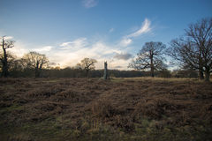 Richmond park. Scenic view of one of london`s largest parks Stock Photo