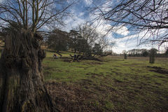 Richmond park. Scenic view of one of london`s largest parks Stock Images