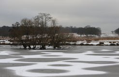 Richmond park in the snow Royalty Free Stock Photo