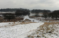 Richmond park in the snow Royalty Free Stock Photography