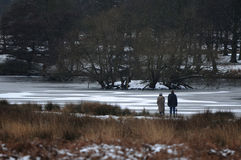 Richmond park in the snow Royalty Free Stock Images