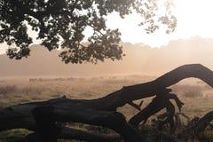 Richmond-Rotwild Lizenzfreie Stockfotografie