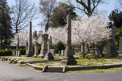 Richmond Virginia Hollywood Cemetery royalty free stock photography