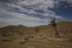 Richtersveld国家公园,南非。 库存图片