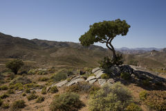 Richtersveld国家公园,南非。 免版税库存照片