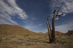Richtersveld Nationalpark, Südafrika. Stockfoto