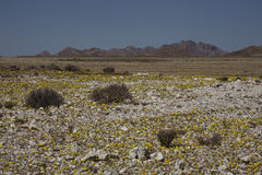 Richtersveld nationalpark, South Africa. arkivfoton