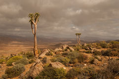 Richtersveld scene. Rugged and rocky terrain in the Richtersveld arid region of South Africa Royalty Free Stock Photos