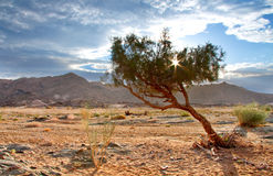 Richtersveld wilderness Royalty Free Stock Images