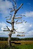 Richtingen. Oude boom. Royalty-vrije Stock Foto's