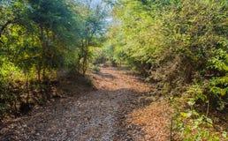 In Richtung zum tiefen Wald Lizenzfreies Stockbild