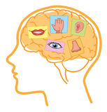 Richtungen des Gehirns 5 Lizenzfreies Stockfoto