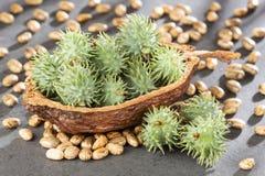 Ricinus communis - Green castor seeds. Text space. Ricinus communis - Green castor seeds stock photography