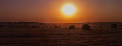 Rick fält i guld- solnedgångljus Royaltyfria Bilder
