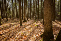 Ricketts Glen Forest Shadows Royalty-vrije Stock Foto