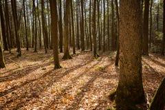 Ricketts Glen Forest Shadows Royalty Free Stock Photo