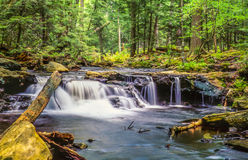 Ricketts Glen harbors Glens Natural Area. A National Natural Landmark royalty free stock photography