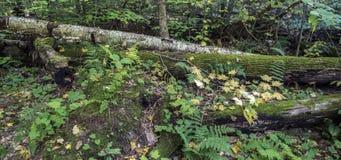 Ricketts roztoka ukrywa roztoka Naturalnego teren zdjęcia stock