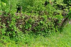 Rickety lath fence in Ukrainian village. Vine-covered rickety lath fence in Ukrainian village at summer Royalty Free Stock Photos