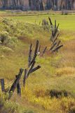 Rickety Meadow Fenceline. A beautiful rugged and rickety fence in a meadow Royalty Free Stock Photography