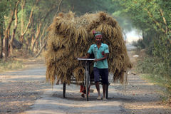 Rickshaw rider transports rice from the farm home Stock Images