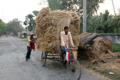 Rickshaw rider transports rice from the farm home Stock Image