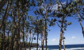 Ricopra la linea costiera mechant, la La Reunion Island, Francia Fotografie Stock