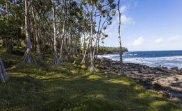 Ricopra la linea costiera mechant, la La Reunion Island, Francia Immagini Stock Libere da Diritti