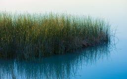 Ricopre con canne il lago Immagine Stock Libera da Diritti