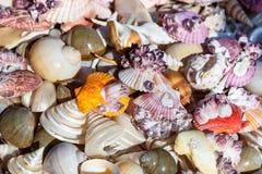 Ricordi delle conchiglie e delle stelle marine Immagine Stock Libera da Diritti