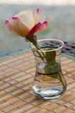 Ricordo di Rosa Fotografia Stock Libera da Diritti
