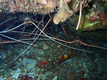 Ricos da beleza da diversidade subaquática, Bornéu de Sabah imagens de stock royalty free