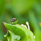 Ricos del polen Fotos de archivo