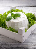 Ricotta with basil e lettuce Stock Photography