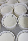 Ricotta cheese baskets just produced in dairy Stock Photography