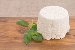 Ricotta cheese, fresh from the mould, mold with herb basil. Stock Images