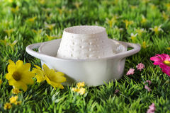 Ricotta cheese over spring background Stock Photography