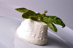 Ricotta italiano del queso Imágenes de archivo libres de regalías