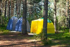 Ricreazione all'aperto comoda La piccola tenda di campeggio tecnica tre sta in ombra dell'abetaia, tempo è soleggiata Campeggio e fotografia stock libera da diritti