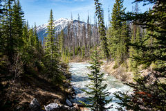 River in yoho national park Stock Photos