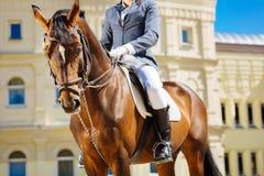 Rid- bärande svarta ridningkängor som rider hans favorit- häst arkivbild