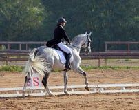 Rid- kvinna och Hanoverian häst Arkivbild