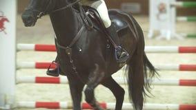 Rid- ryttare på den ljust rödbrun hästen som galopperar på konkurrens för showbanhoppning stock video