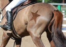 Rid- sport i detaljer Dra tillbaka av sporthästen med med ett härligt Arkivbild