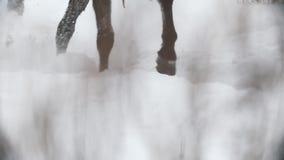Rid- sport - klövar av en häst som galopperar i snöig fält arkivfilmer